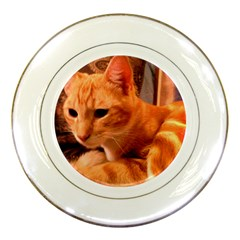 Liam The Beaut Porcelain Display Plate