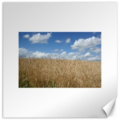 Grain and Sky Canvas 16  x 16  (Unframed)
