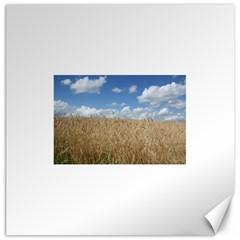 Grain and Sky Canvas 20  x 20  (Unframed)