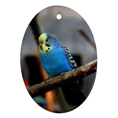 Sweet Budgie Oval Ornament
