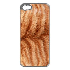 Cat Coat 1 Apple Iphone 5 Case (silver)
