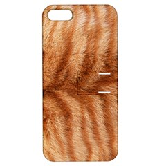 Cat Coat 1 Apple Iphone 5 Hardshell Case With Stand