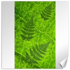 Leaf & Leaves Canvas 12  x 12  (Unframed)