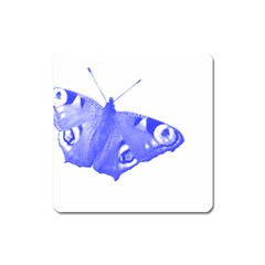 Decorative Blue Butterfly Magnet (Square)