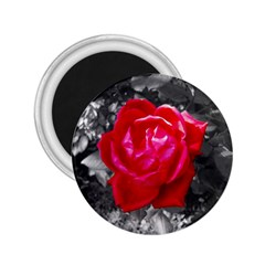 Red Rose 2 25  Button Magnet