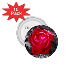 Red Rose 1 75  Button (10 Pack)