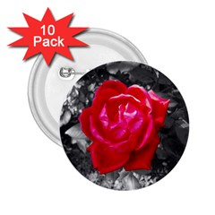 Red Rose 2 25  Button (10 Pack)