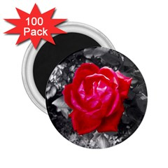 Red Rose 2.25  Button Magnet (100 pack)