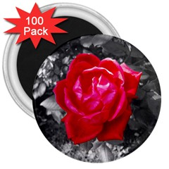 Red Rose 3  Button Magnet (100 pack)