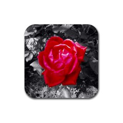 Red Rose Drink Coasters 4 Pack (Square)