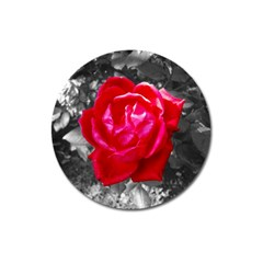 Red Rose Magnet 3  (round)