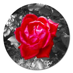Red Rose Magnet 5  (Round)