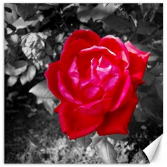 Red Rose Canvas 12  x 12  (Unframed)