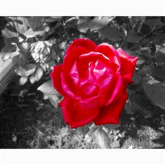 Red Rose Canvas 16  x 20  (Unframed)