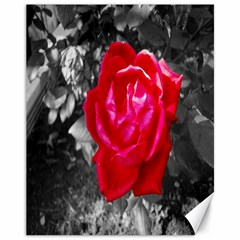 Red Rose Canvas 11  X 14  (unframed)