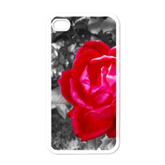 Red Rose Apple Iphone 4 Case (white)