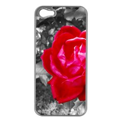 Red Rose Apple iPhone 5 Case (Silver)