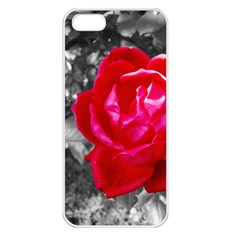Red Rose Apple iPhone 5 Seamless Case (White)