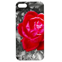 Red Rose Apple Iphone 5 Hardshell Case With Stand