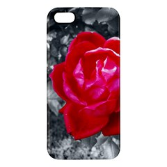 Red Rose iPhone 5 Premium Hardshell Case