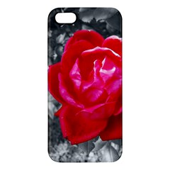 Red Rose iPhone 5S Premium Hardshell Case