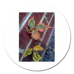 A Leaf In Stages Magnet 5  (round)