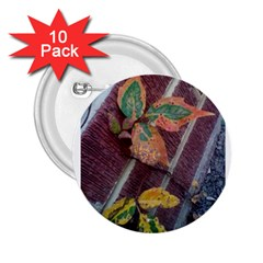 A Leaf In Stages 2.25  Button (10 pack)