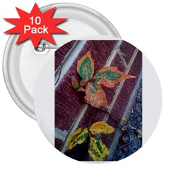A Leaf In Stages 3  Button (10 pack)