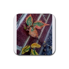 A Leaf In Stages Drink Coaster (Square)