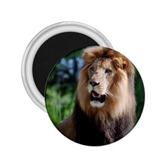 Regal Lion 2 25  Button Magnet