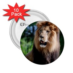 Regal Lion 2 25  Button (10 Pack)