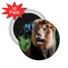 Regal Lion 2.25  Button Magnet (10 pack)