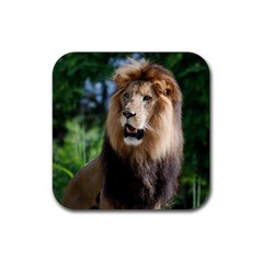 Regal Lion Drink Coasters 4 Pack (Square)
