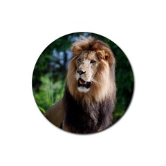 Regal Lion Drink Coasters 4 Pack (Round)