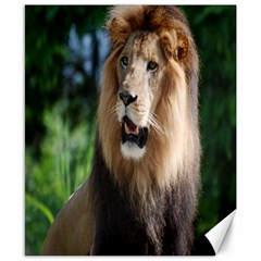 Regal Lion Canvas 8  X 10  (unframed)
