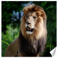 Regal Lion Canvas 12  X 12  (unframed)
