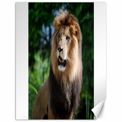 Regal Lion Canvas 18  x 24  (Unframed)