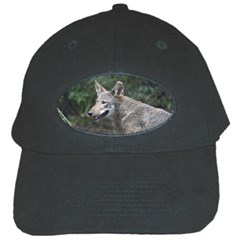 Shdsc 0417 10502cow Black Baseball Cap