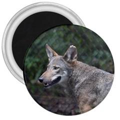Shdsc 0417 10502cow 3  Button Magnet