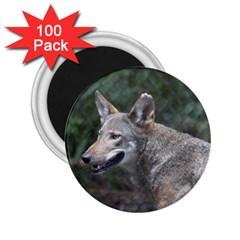 Shdsc 0417 10502cow 2.25  Button Magnet (100 pack)