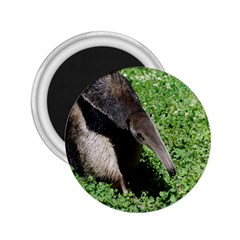 Giant Anteater 2.25  Button Magnet