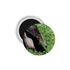 Giant Anteater 1.75  Button Magnet