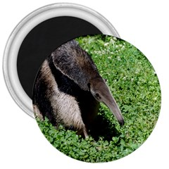 Giant Anteater 3  Button Magnet