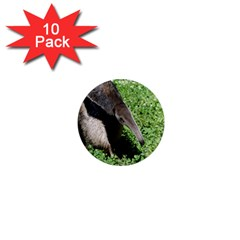 Giant Anteater 1  Mini Button Magnet (10 pack)