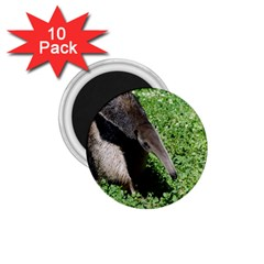 Giant Anteater 1.75  Button Magnet (10 pack)