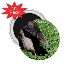 Giant Anteater 2.25  Button Magnet (10 pack)