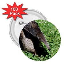 Giant Anteater 2 25  Button (100 Pack)