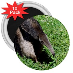 Giant Anteater 3  Button Magnet (10 Pack)