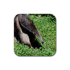Giant Anteater Drink Coaster (Square)
