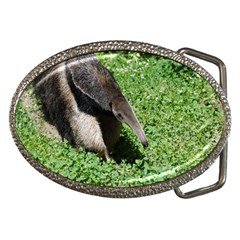 Giant Anteater Belt Buckle (Oval)